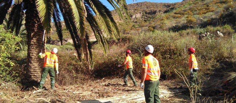 Operarios de Gesplan en el Parque Rural de Anaga